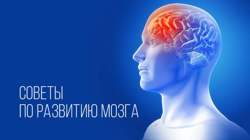 картинка к статье о развитии мозга